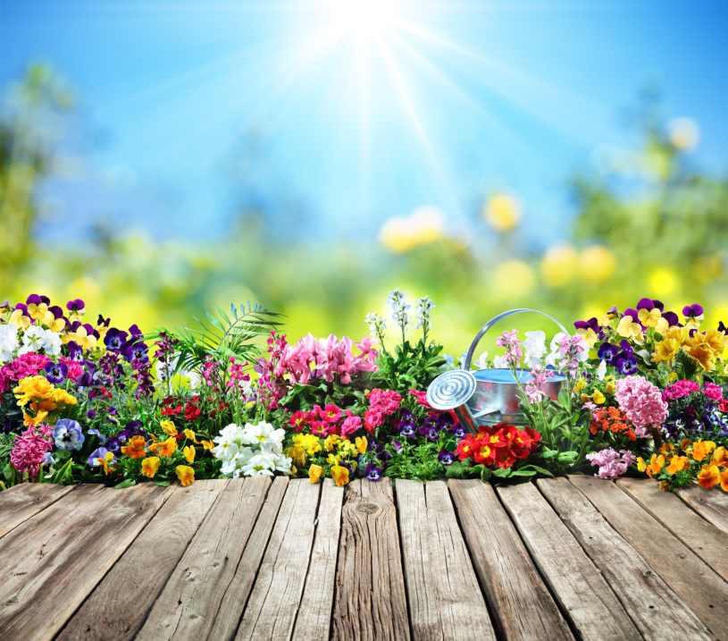 jardin en Verano 2020